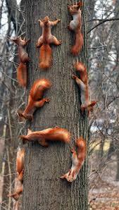 duzo_na_drzewie